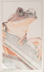 Pointillism Tree Frog - 13 x 17 ORIGINAL ARTWORK By Kevin Jordan (c) Copyrighted All Rights Reserved